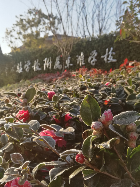 上海市实验学校附属东滩学校校园美景2